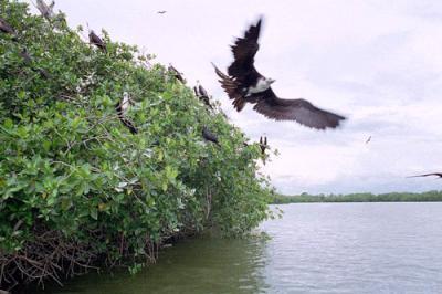 20070904125849-manglars.jpg
