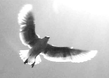 20080605143825-seagull010.jpg